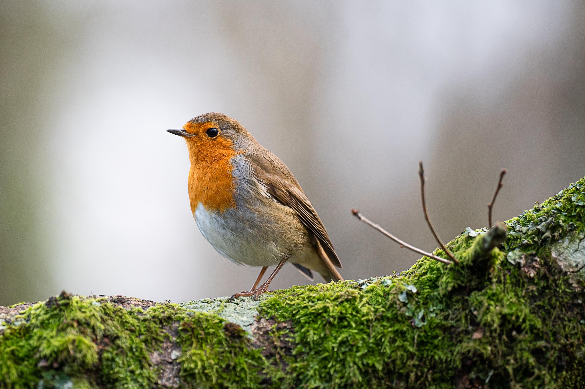 robin at stover park